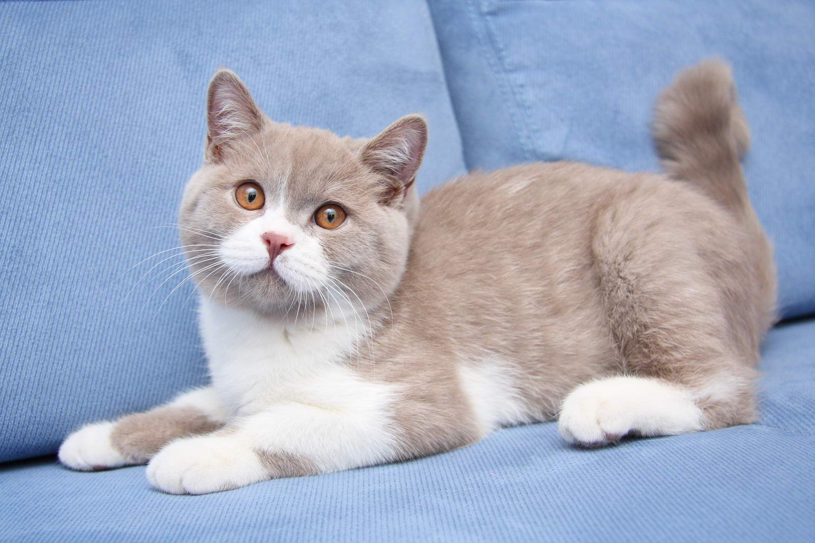 Кто нарисовал шубку для кошки Фани?  Пушистая красотка мечтает о ценителе такой картины... рис 4