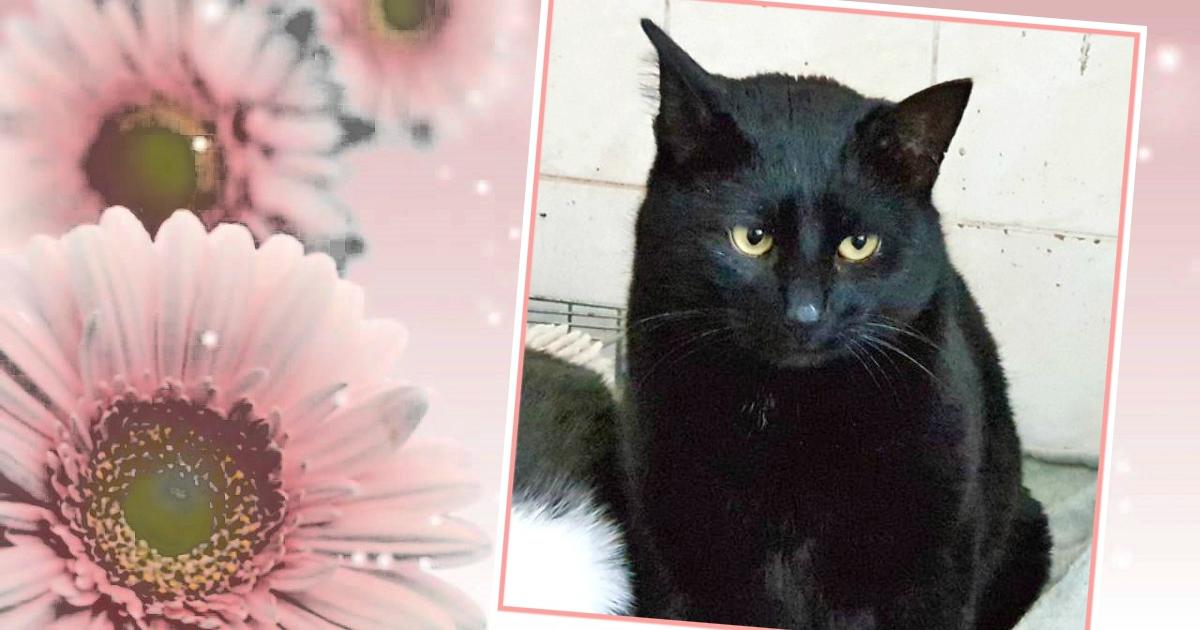 «Вася, Вася... Человеческие глазки...» Кот, которого предавали дважды, затаился в ожидании чуда!