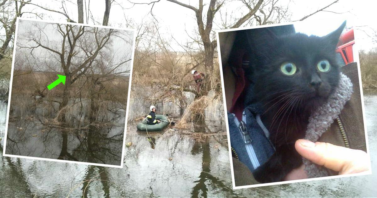 Кот залез на дерево отдохнуть, а проснулся в центре паводка! Маленького непоседу спасли через 5 дней - и сразу пристроили)