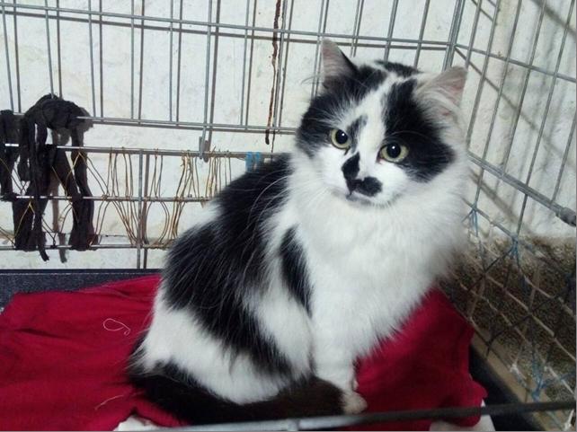 Кто нарисовал шубку для кошки Фани?  Пушистая красотка мечтает о ценителе такой картины... рис 5