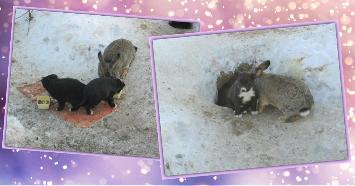 Кролик убежал из дома и поселился в норе… с собакой! А когда она погибла, то ушастик стал папой её щенков )
