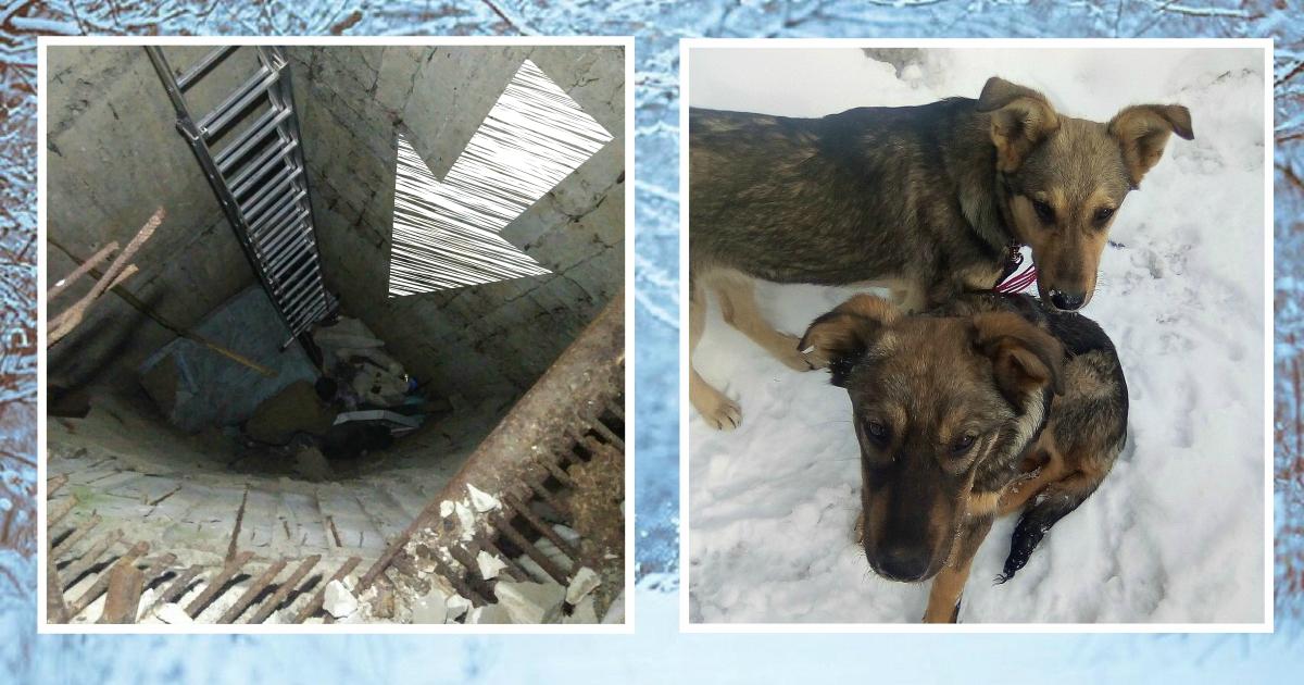 Уехал на рыбалку - вернулся со щенками! История спасения собачек из 8-метрового колодца