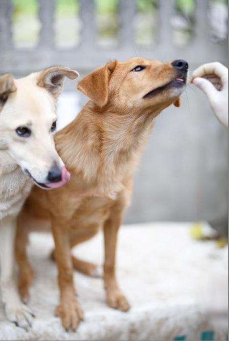 """""""Хочу на ручки!"""" Собака Санька и ей подобные: зачем они лезут в наше личное пространство? рис 3"""