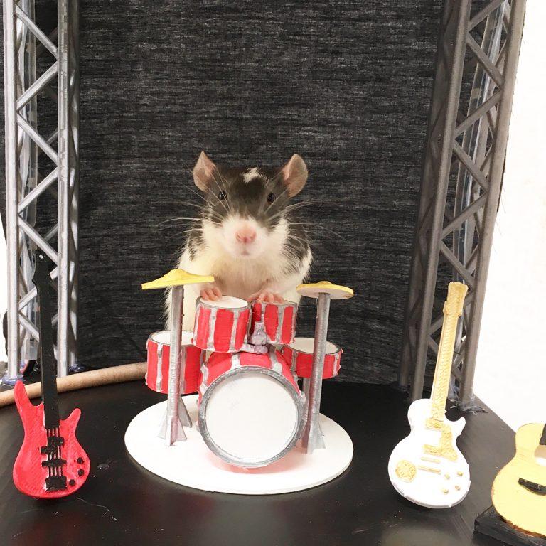 20 причин, почему вы захотите завести в доме декоративную крысу! Это же маленькие комочки счастья :) рис 3