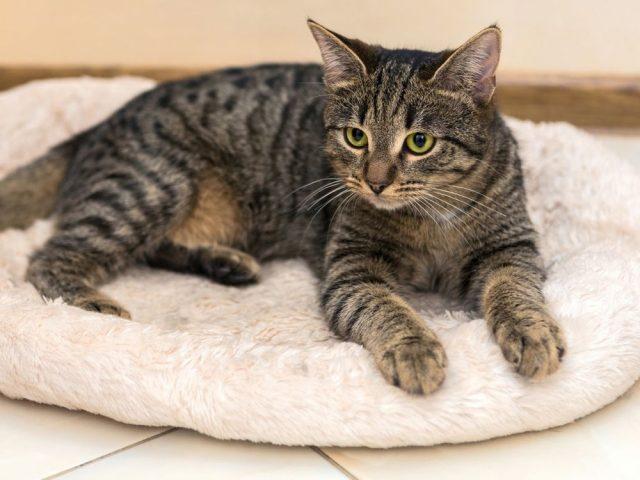 Кто нарисовал шубку для кошки Фани?  Пушистая красотка мечтает о ценителе такой картины... рис 2