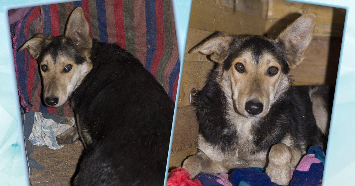 «Она билась в судорогах среди стаи бездомных псов...» У собачки Милы - очень туманное прошлое, но теперь её жизнь меняет свой курс!