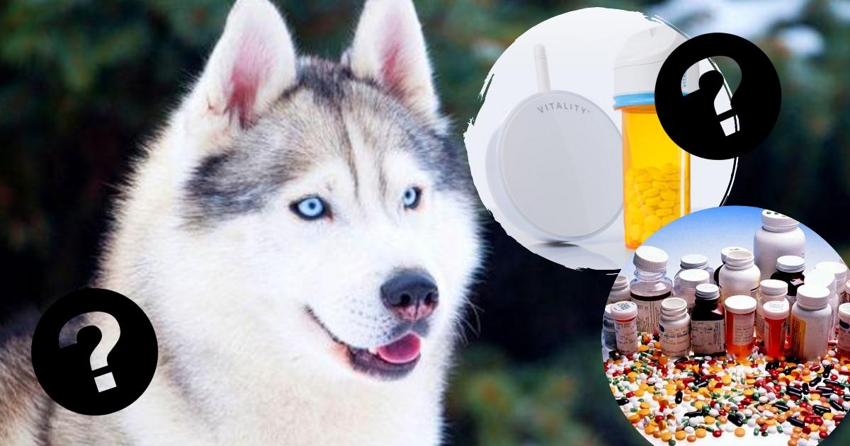 Витамины для кожи и шерсти собак: лучшее качество и цена. Кстати, нужны ли они вообще?