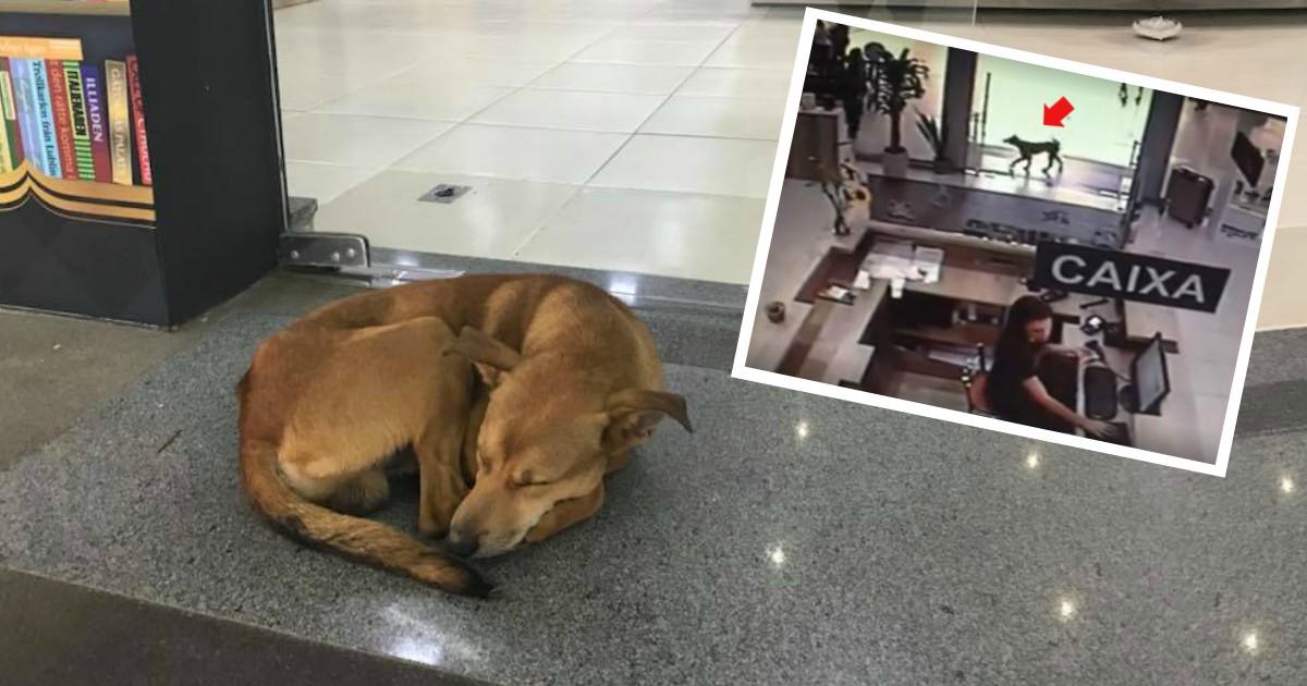Бездомный пёс лежал у книжного магазина... А потом зашел внутрь и изменил свою жизнь! :)