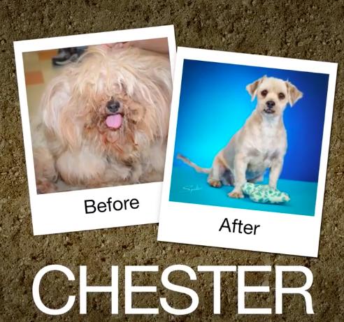 Chester-e1470664498297
