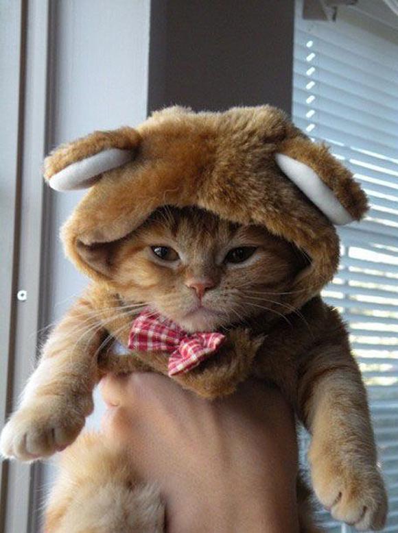 Dangerous-Cat-Bear