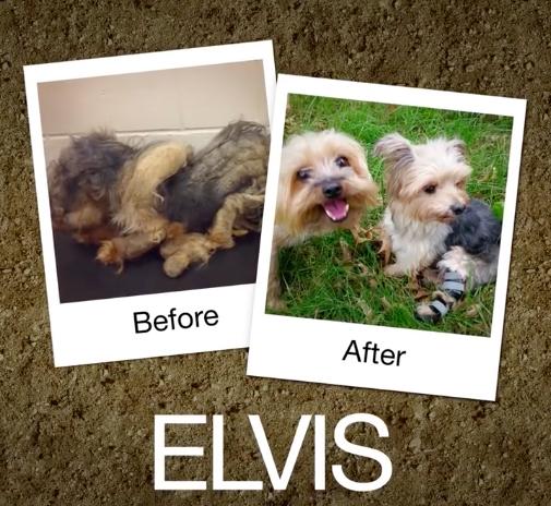 Elvis-e1470664523702