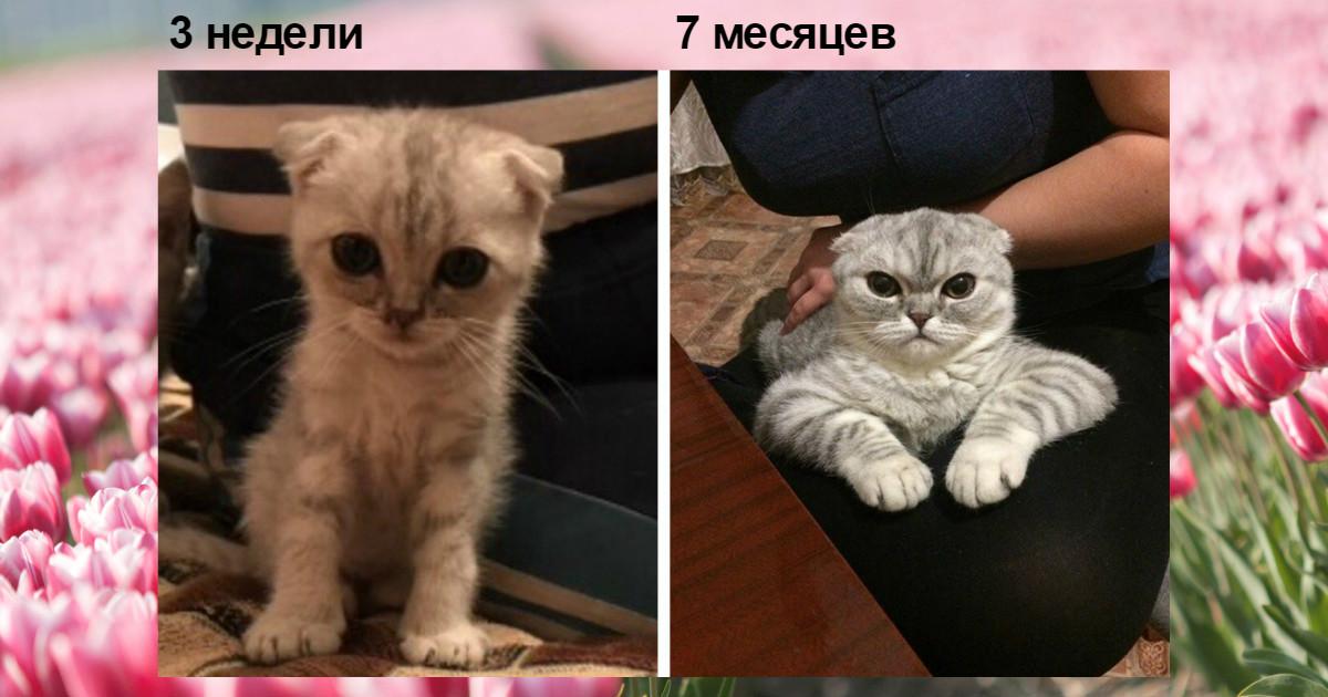 Из котенка в котяру! :) Люди поделились фотографиями мурлык в детстве и сейчас...
