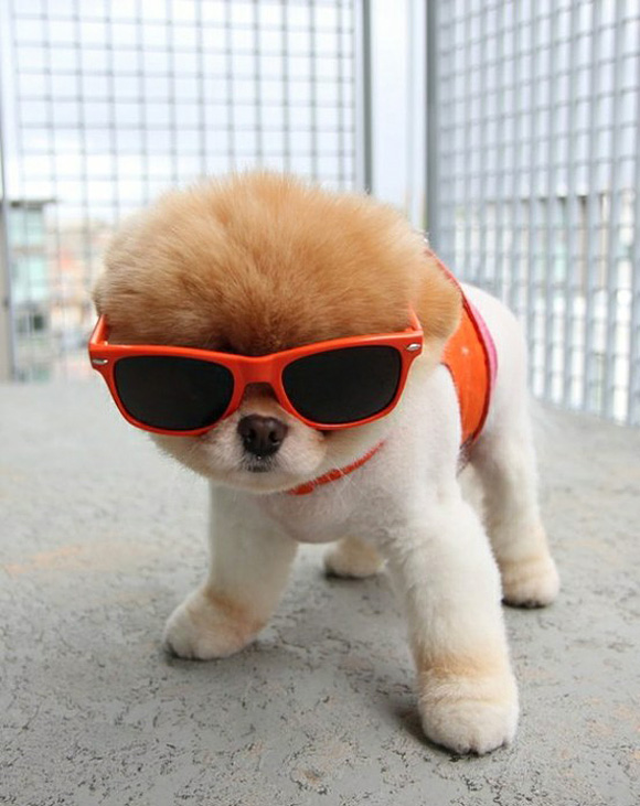 Hipster-Puppies