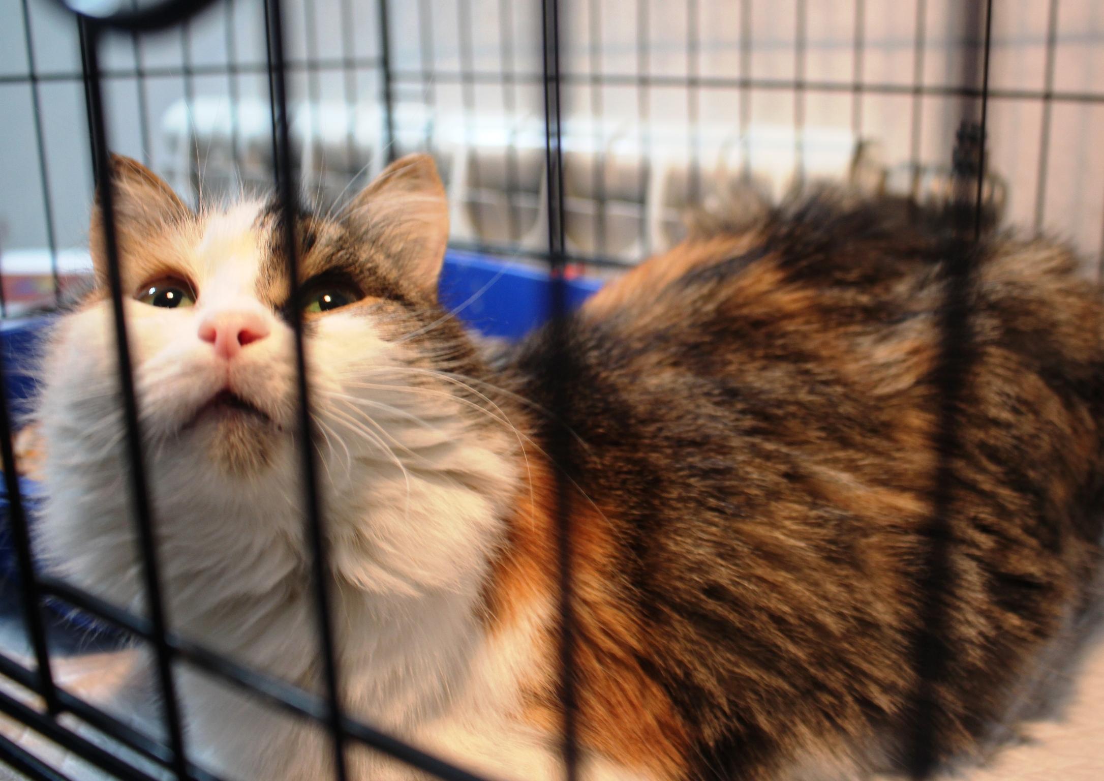 """""""Кошки нашего двора!"""" О том, как жители Домодедово превращают бродячих животных в домашних питомцев рис 5"""