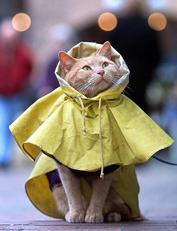 Kitty-Coat