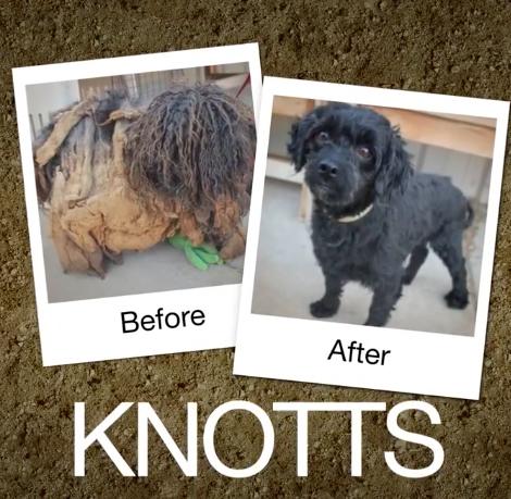 Knotts-e1470664272811