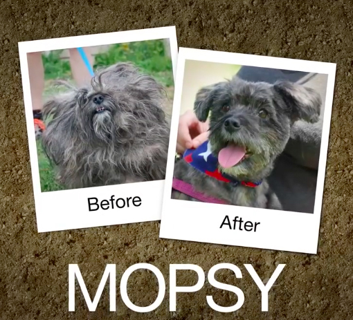 Mopsy-e1470664471282