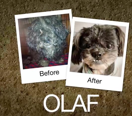 Olaf-e1470664153159