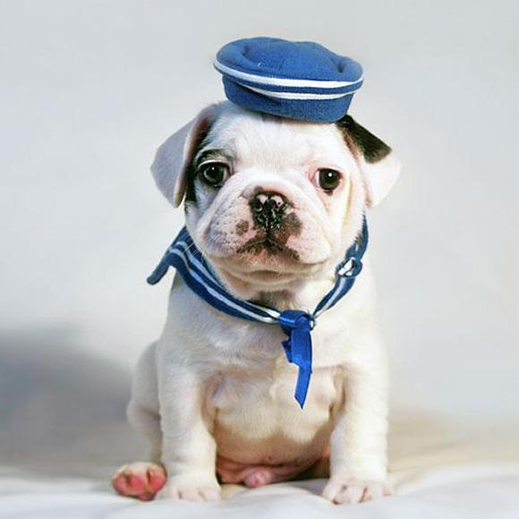 Puppy-Sailor