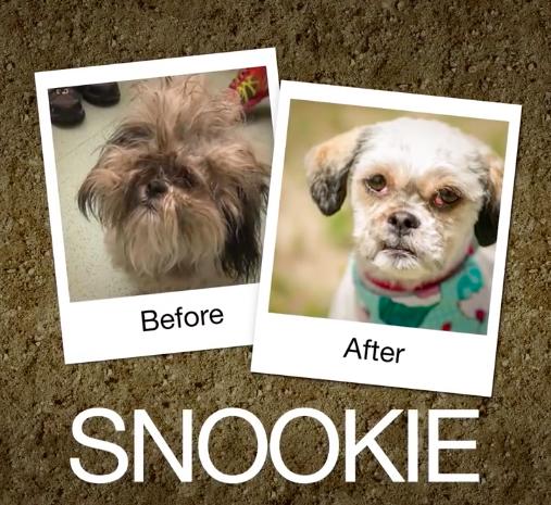 Snookie-e1470664446719