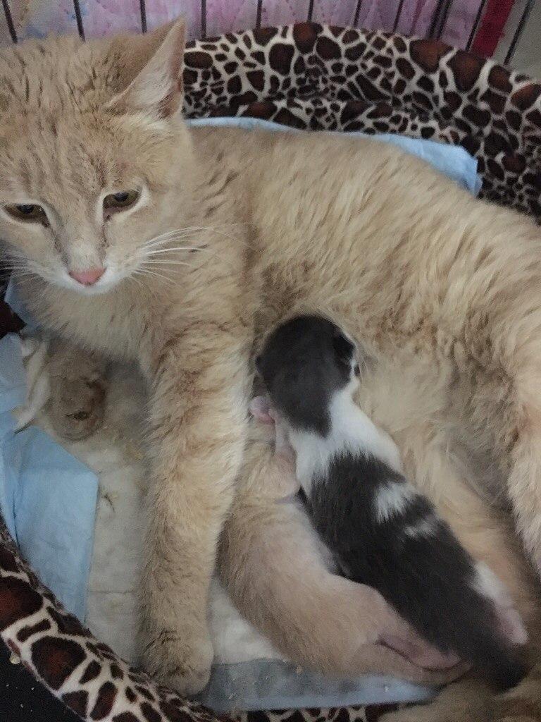 Кошка Марта окотилась в церковной лавке! Теперь у мамочки 2 малыша - родной и приёмный... рис 3