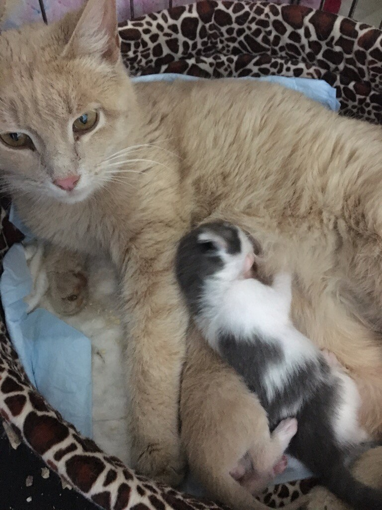 Кошка Марта окотилась в церковной лавке! Теперь у мамочки 2 малыша - родной и приёмный... рис 4