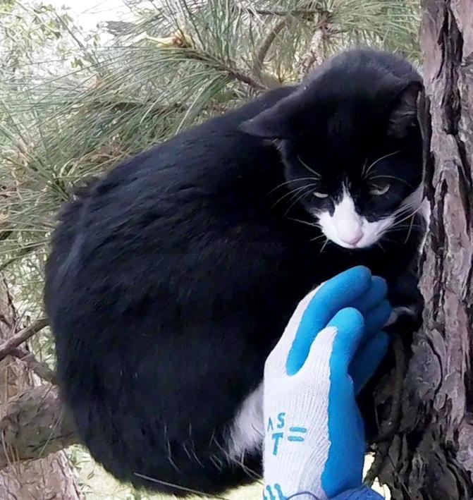 cat-rescue-guy