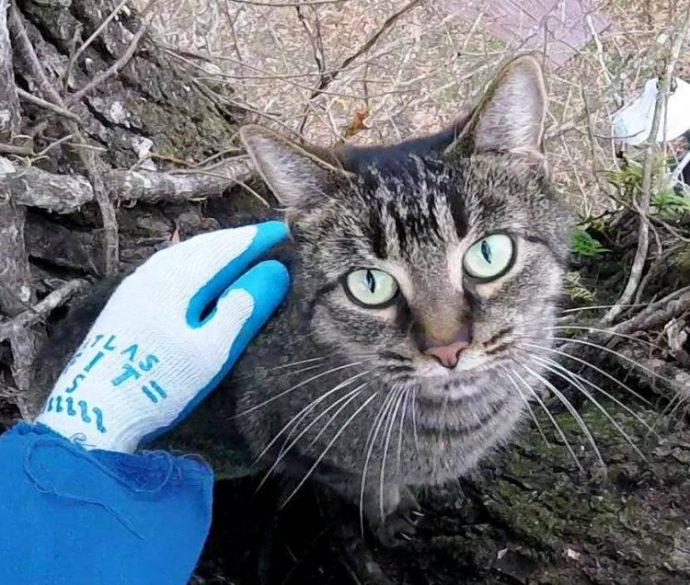 cat-rescue-guy2-750x636