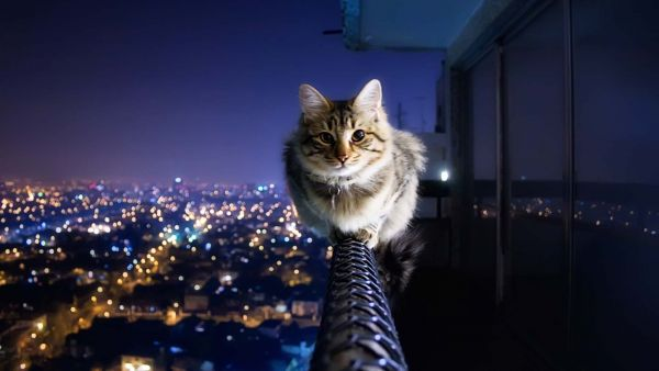 cat_on_the_high_roof.jpg