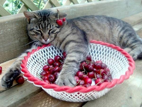 cherry-pits.jpg
