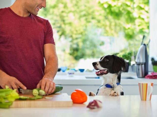 dog-vegetables