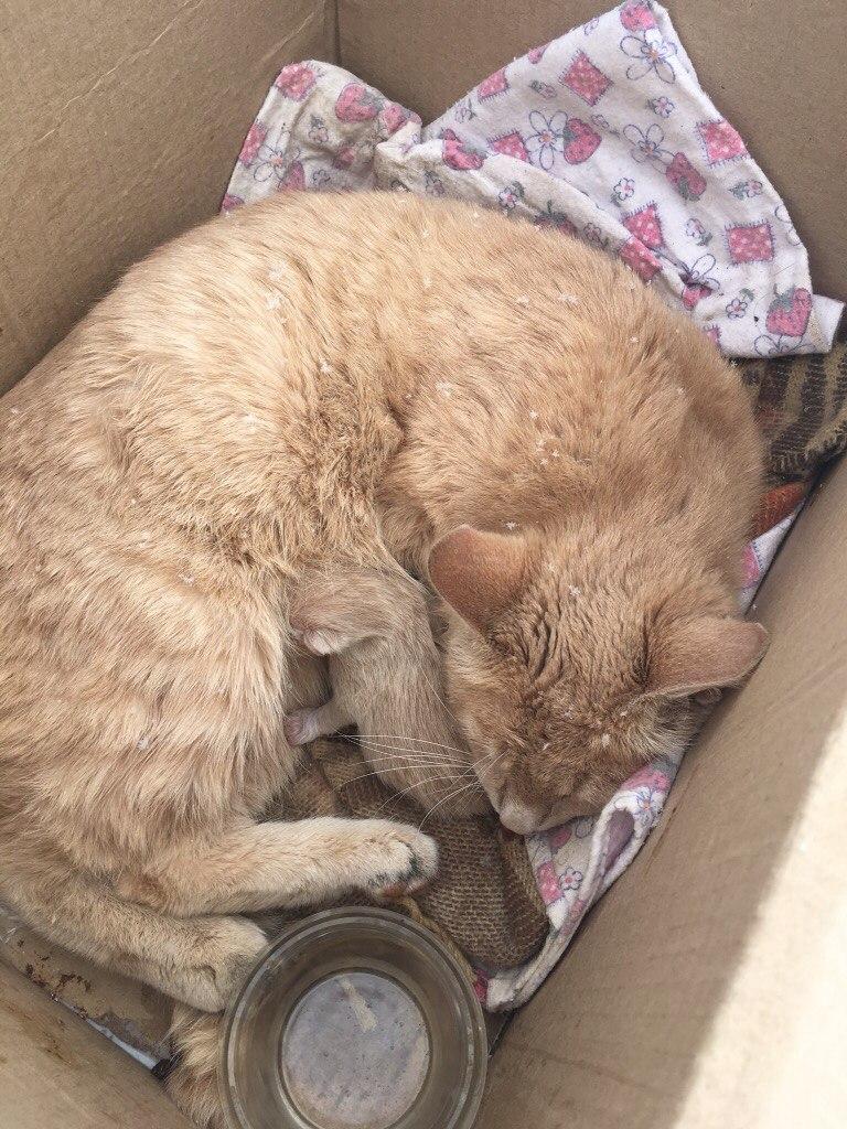 Кошка Марта окотилась в церковной лавке! Теперь у мамочки 2 малыша - родной и приёмный... рис 2
