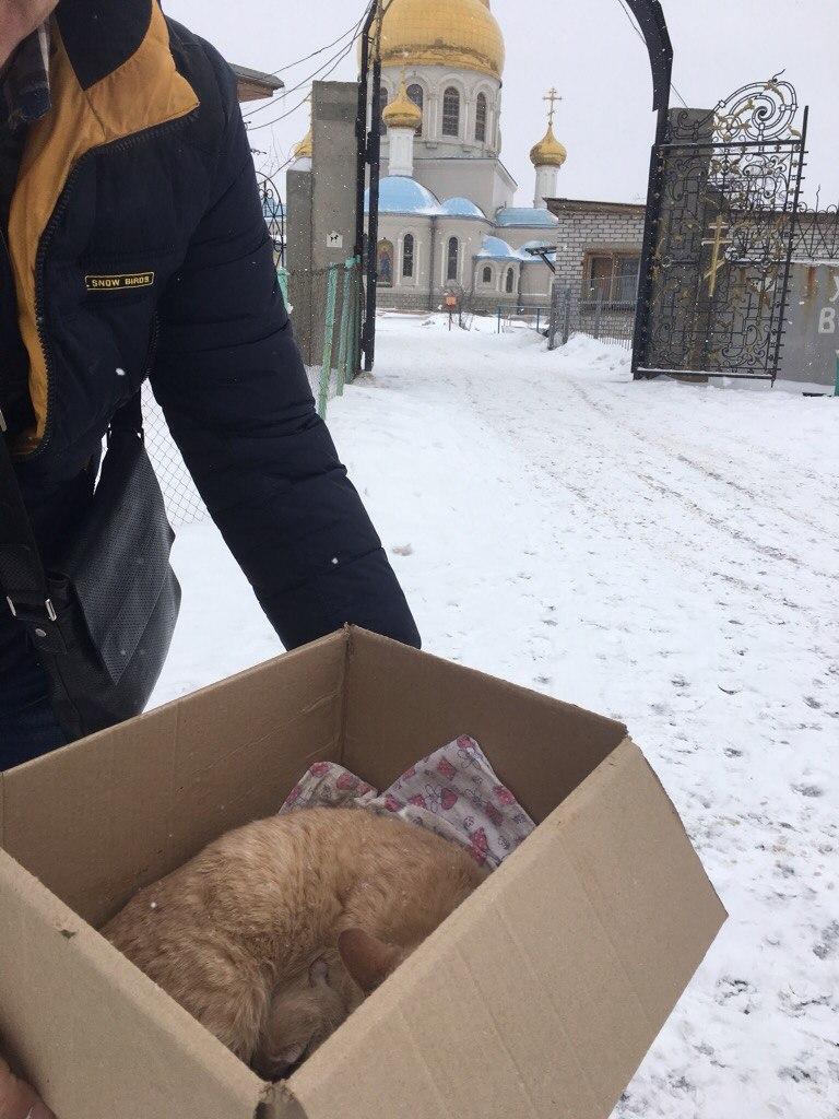 Кошка Марта окотилась в церковной лавке! Теперь у мамочки 2 малыша - родной и приёмный...