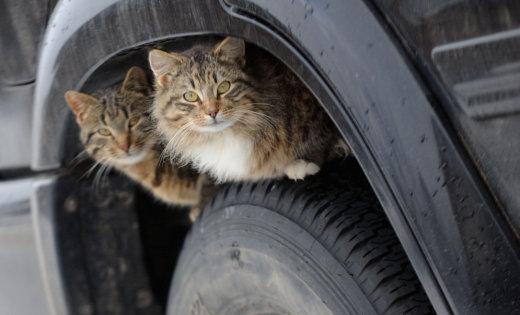 """""""Кошки нашего двора!"""" О том, как жители Домодедово превращают бродячих животных в домашних питомцев"""