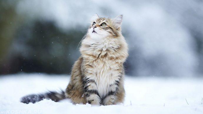 kot-na-snegu.jpg