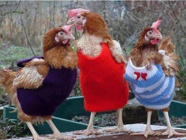 """""""Кто и как может вылупиться из яйца-матрёшки?"""" Австралийский фермер нашёл в курятнике вот такую громадину... рис 2"""