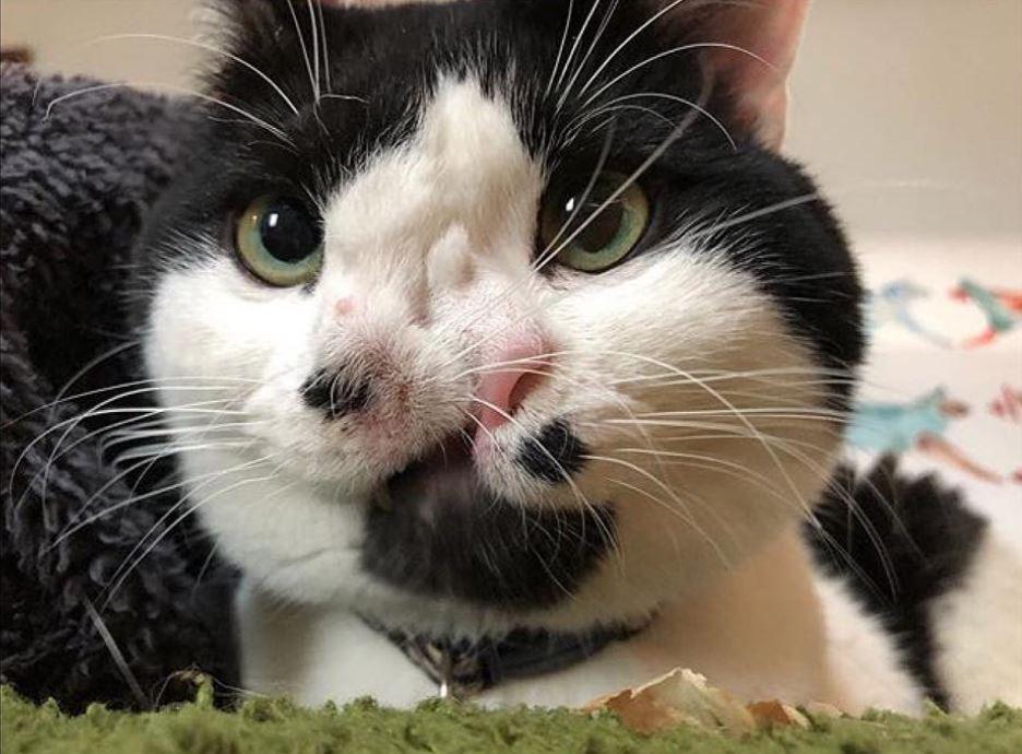 Кот с двумя носами дышит в 2 раза лучше! Мемфис передаёт привет всем, кто хотел его усыпить...