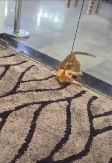 350 секунд смеха от Mur.tv! Вы и не думали, что коты умеют вытворять такое :)