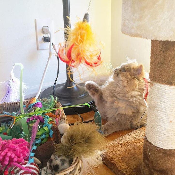 Котёнок, найденный в кустарнике, был похож на несчастного совёнка... Но превратился в обаятельную принцессу! :) рис 13