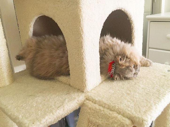 Котёнок, найденный в кустарнике, был похож на несчастного совёнка... Но превратился в обаятельную принцессу! :) рис 14