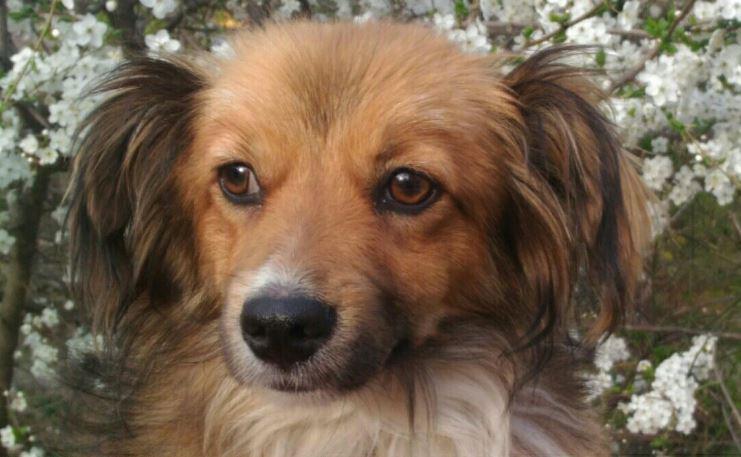 Голодному псу дали сосиску, а он... отнёс её кошке! История бездомного Вайзика с ушами-бабочками