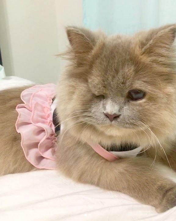 Котёнок, найденный в кустарнике, был похож на несчастного совёнка... Но превратился в обаятельную принцессу! :) рис 6