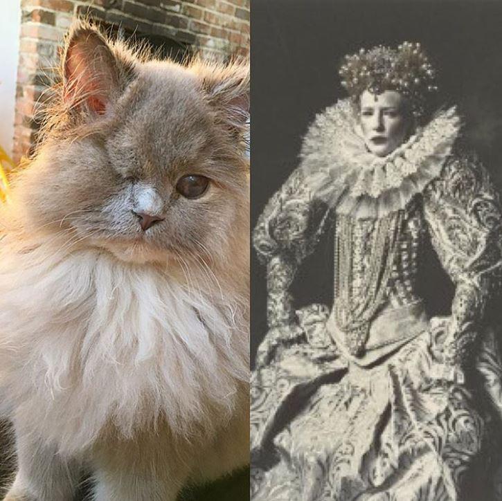 Котёнок, найденный в кустарнике, был похож на несчастного совёнка... Но превратился в обаятельную принцессу! :) рис 12