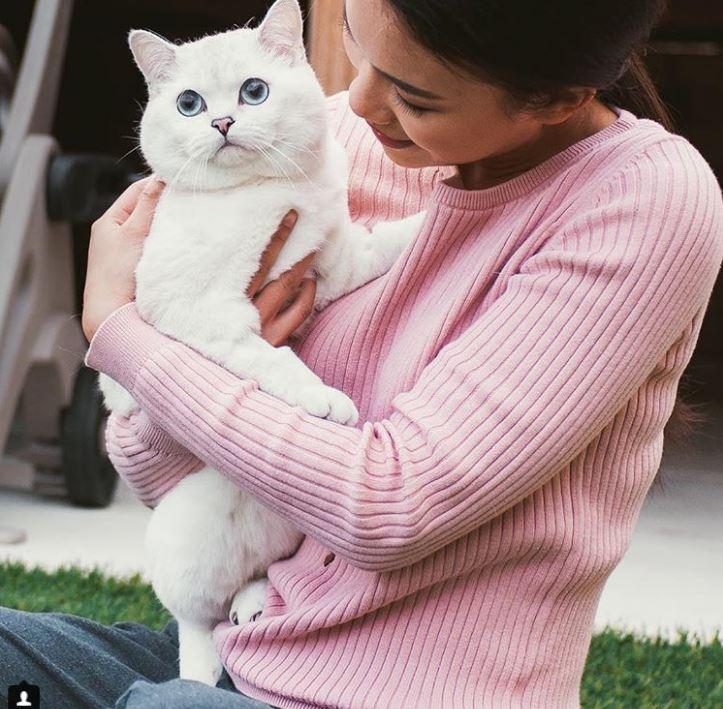 Британский белый кот по кличке Белый Кофе - 8