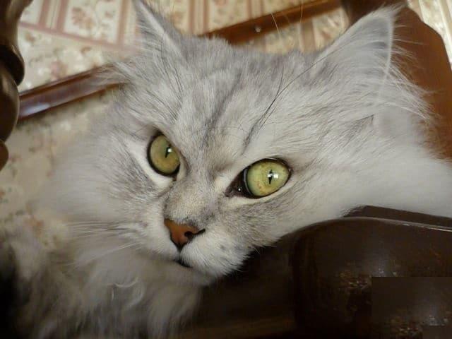 """""""Вы все говорили, что это злой кот. Но у него просто суровая история!"""" Рассказ обиженного хозяина"""