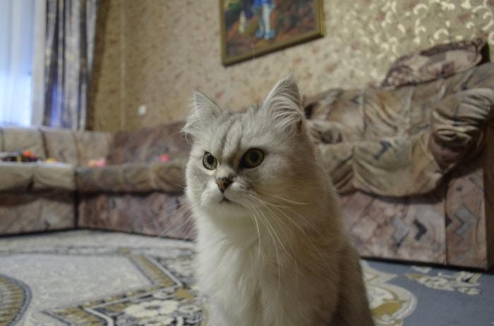 """""""Вы все говорили, что это злой кот. Но у него просто суровая история!"""" Рассказ обиженного хозяина рис 2"""