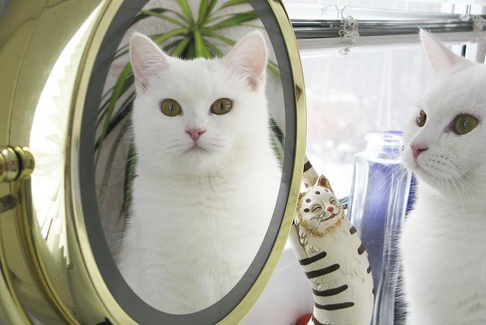 """""""Она выбрала меня - как знала..."""" Необычная история о кошке, которая прислала хозяевам... вторую себя! рис 6"""