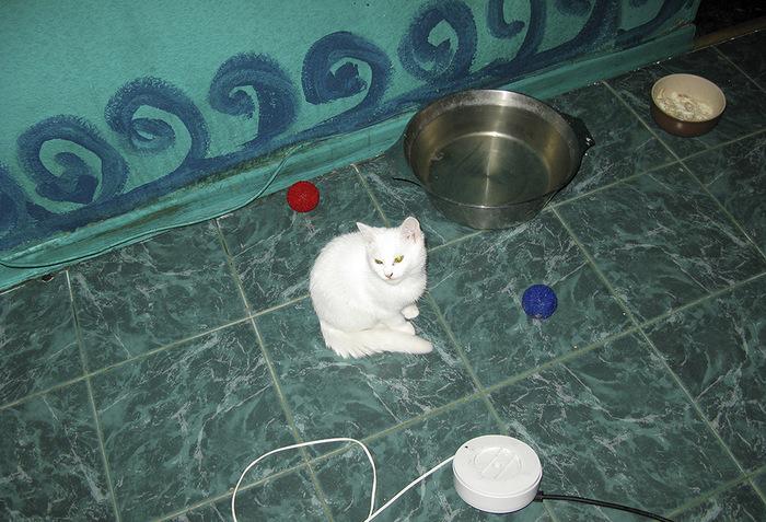 """""""Она выбрала меня - как знала..."""" Необычная история о кошке, которая прислала хозяевам... вторую себя! рис 2"""