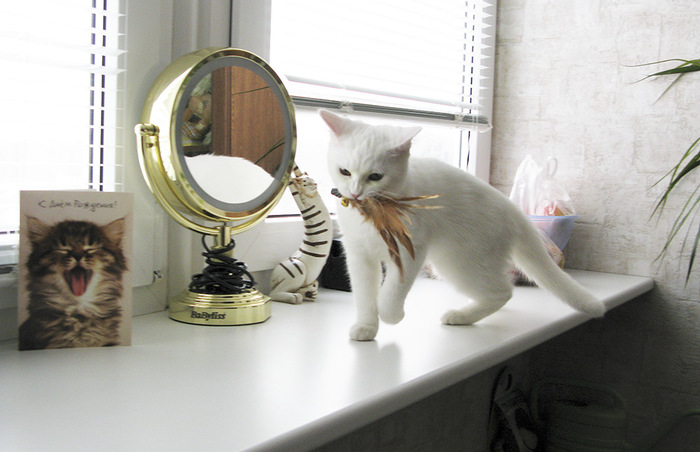 """""""Она выбрала меня - как знала..."""" Необычная история о кошке, которая прислала хозяевам... вторую себя! рис 5"""