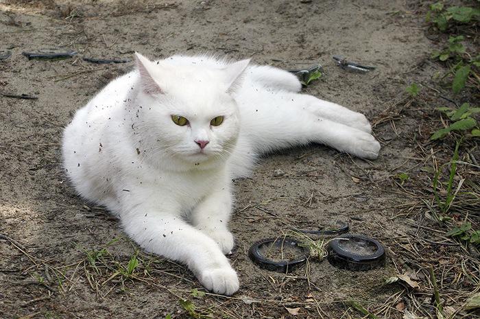 """""""Она выбрала меня - как знала..."""" Необычная история о кошке, которая прислала хозяевам... вторую себя! рис 11"""